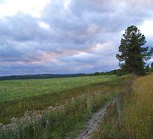 Life on the Prairies by Barrie Daniels