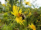 Bumble bee's Terrific Day by Barberelli
