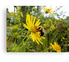 Bumble bee's Terrific Day Canvas Print