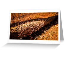 Autumn Forest Scene - Fall Time - Tree Log with Fungi & Mushrooms in Sunlight Greeting Card