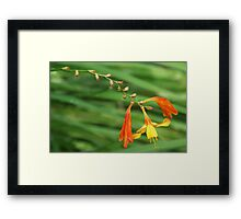 Orange and Yellow Perenial Framed Print