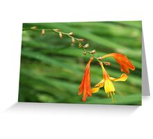 Orange and Yellow Perenial Greeting Card