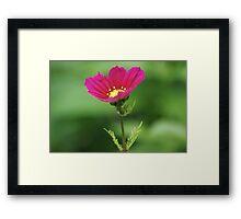 Red Flower Bokeh Framed Print