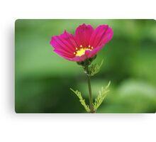 Red Flower Bokeh Canvas Print