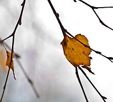 Lone Leaf by Wealie