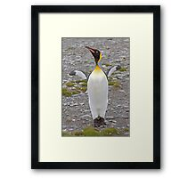 Cooeee you Tourists!  Look at Me!  I'm a Flasher! ;o) Framed Print