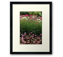 Red Poker Garden Flower Bed Framed Print