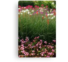Red Poker Garden Flower Bed Canvas Print