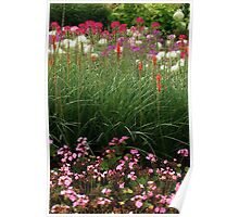Red Poker Garden Flower Bed Poster