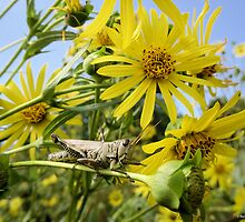 Grasshopper Relaxing Amongst the Flowers by Barberelli