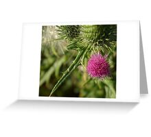 Prickly Pink Greeting Card