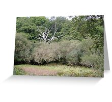 Silver stick tree in greenery Greeting Card