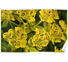 Yellow Green Dew Drop Poster