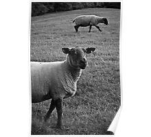 Feeling Sheepish Poster