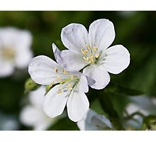 Silky White Flowers Photographic Print