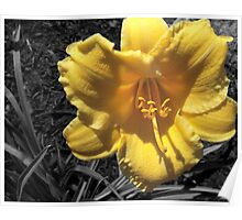 SC Day Lily Poster