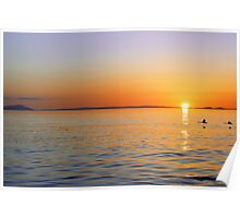 Swan Sunset Poster