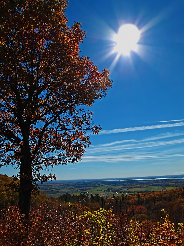 Rural Fall Landscape ~ Silhouette of a Single Tree bathed in Sun Rays on Hill by Chantal PhotoPix