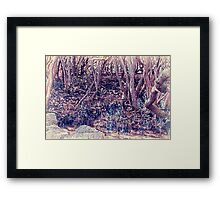 Mangroves - Homebush Bay, Sydney. Framed Print