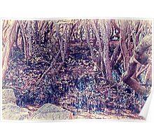 Mangroves - Homebush Bay, Sydney. Poster