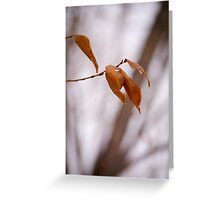 Bitter Leaf Greeting Card