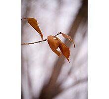 Bitter Leaf Photographic Print