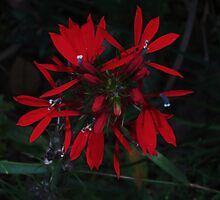 Vibrant Red by RVogler