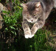 Jumping cat Sticker