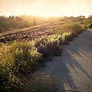 Old Mission Park by Ellen Cotton