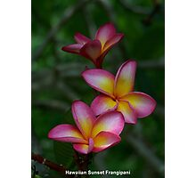 Hawaiian Sunset Frangipani Photographic Print