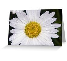 Wet Shasta Daisy Greeting Card