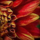 Molten dahlia by Celeste Mookherjee