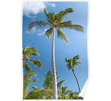 Palm trees. Poster