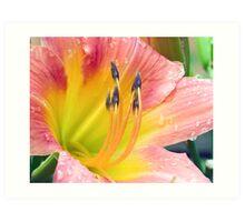 Salmon Pink & Yellow Day Lily Art Print