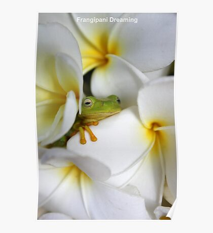 Frangipani Dreaming - Award Winner Poster