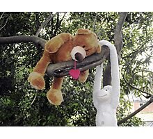 Hanging around with a friend in the garden Photographic Print