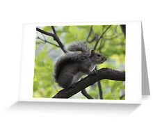 Squirrel - Close Up on a Branch - Bear Mtn. - 8-11 Greeting Card