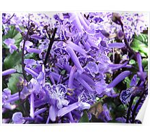 Purple Cacophony Poster