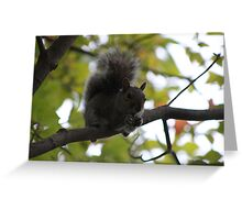 Squirrel Eating on a Branch - Bear Mtn. - 8-11 Greeting Card