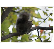 Squirrel Eating on a Branch - Bear Mtn. - 8-11 Poster