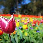 Sea of Tulips by NinaJoan