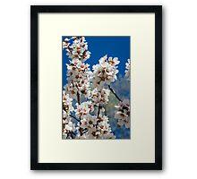 Almond Flowers Framed Print