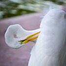 Egret Peeking by George Lenz