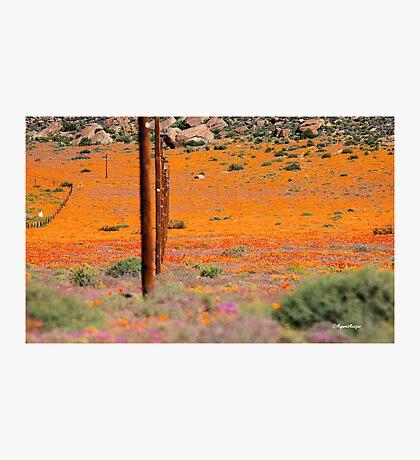 A UNIQUE FLORA...... NAMAKWA,,,ONE Photographic Print