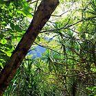 Hawaiian Jungle by karolina