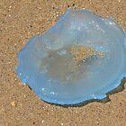 Jellyfish Blue by Graeme  Hyde