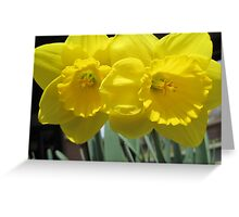 Two Daffodils - NYC - 4-11 Greeting Card