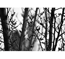 Through branches. Photographic Print