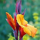 It's NOT a Bird of Paradise (Flower) by Jann Ashworth