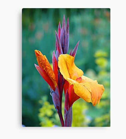 It's NOT a Bird of Paradise (Flower) Canvas Print
